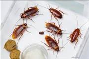 Cansado de cucarachas y chinch