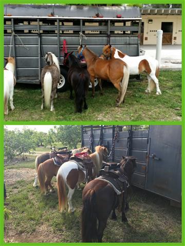 Ponies & Petting Zoo of Miami. image 2