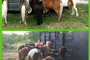 Ponies & Petting Zoo of Miami. thumbnail 2