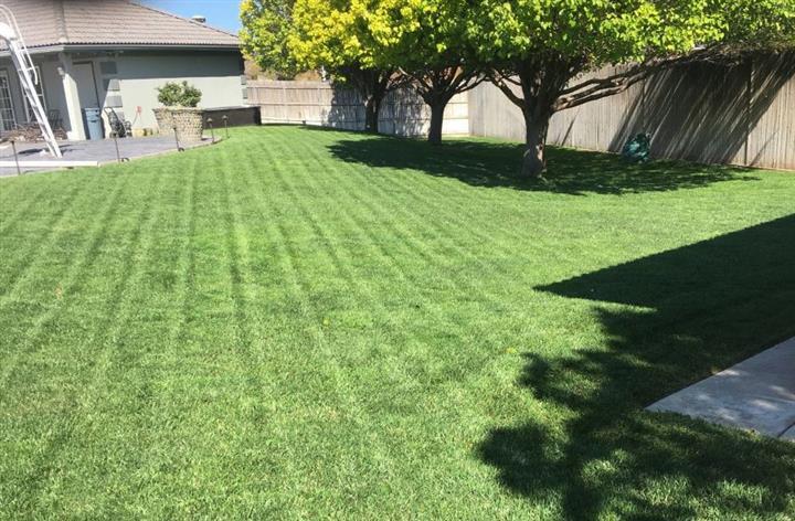 Green Grass image 7