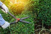 SoCal Tree Service thumbnail 4