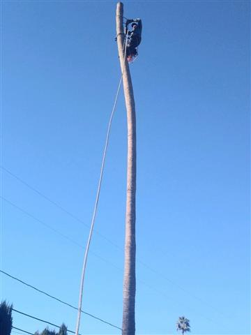 Guillermo's Tree Service image 1