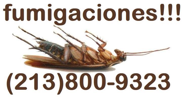 FUMIGACIÓN DE CUCARACHAS. image 2
