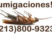 FUMIGACIÓN DE CUCARACHAS. thumbnail