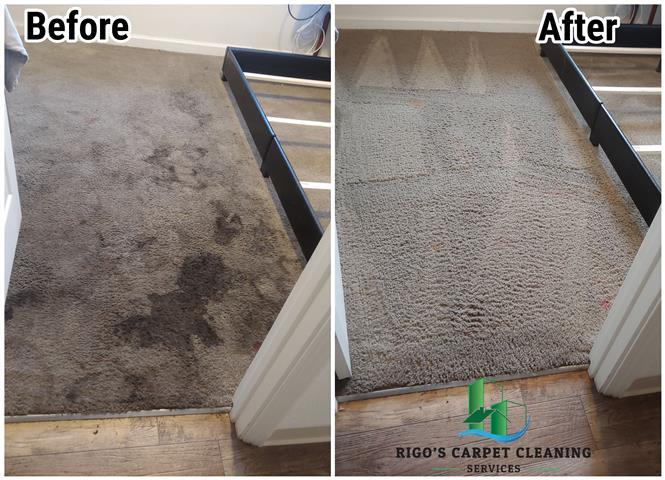 Rigo's Carpet Cleaning image 2