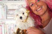 Beautiful Maltese puppies thumbnail