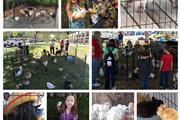 Ponies & Petting Zoo of Miami. thumbnail 3