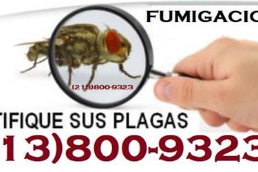 FUMIGACIONES LATINOS PLAGAS en Los Angeles