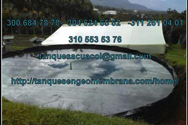 ESTANQUES BAJO INVERNADERO en Bogota