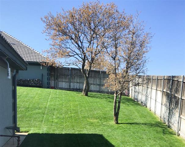 Green Grass image 5