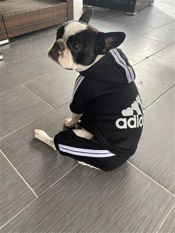 Cuidado de mascota image 4