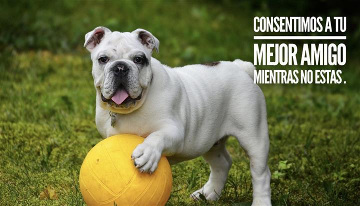 The Dog Club image 9