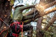 J Perez Tree Service thumbnail 1