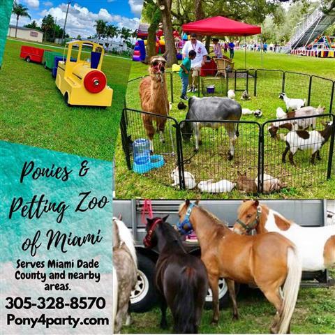 Ponies & Petting Zoo of Miami. image 1