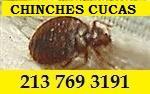 CHINCHE/CUCAS/BARATO. en Los Angeles