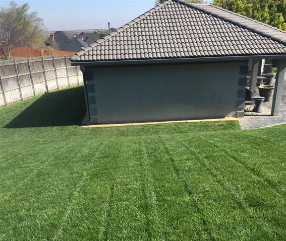 Green Grass image 8