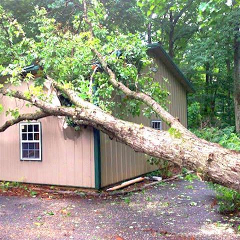 J Perez Tree Service image 4
