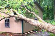 J Perez Tree Service thumbnail 4