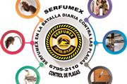 SERFUMEX CONTROL DE PLAGAS thumbnail 3