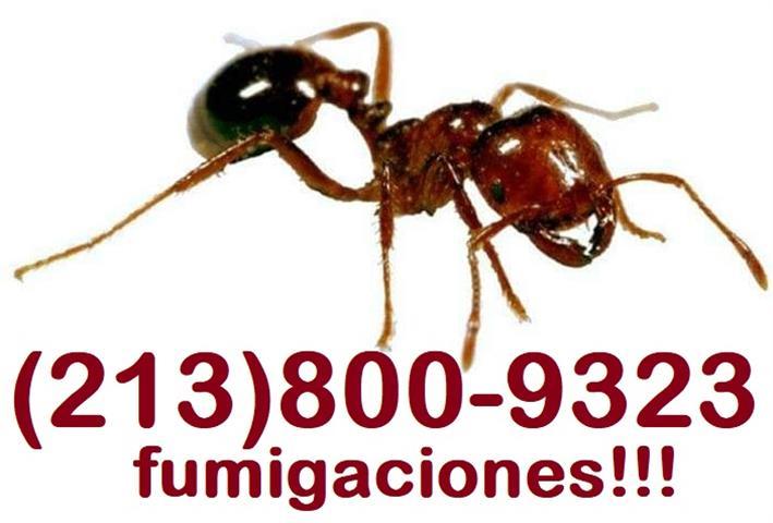 FUMIGACIÓN DE CUCARACHAS. image 4