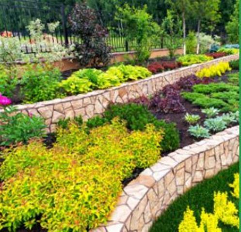 Maldonado's Gardening & Tree image 2