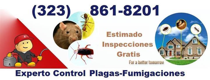 FUMIGACIÓN DE CUCARACHAS . image 2