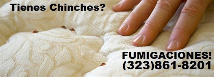 FUMIGACIÓN DE CUCARACHAS . image 3