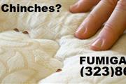 FUMIGACIÓN DE CUCARACHAS . thumbnail