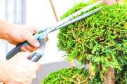 J Perez Tree Service thumbnail 3