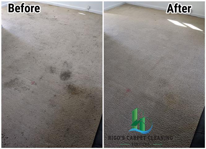 Rigo's Carpet Cleaning image 3