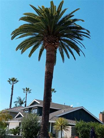 Guillermo's Tree Service image 2