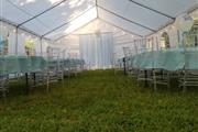 DFW Party Tent Rentals thumbnail 3