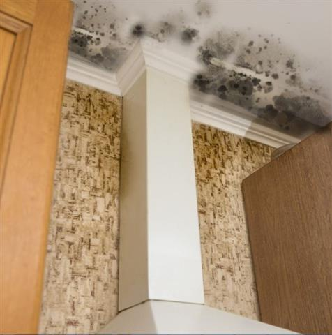 CAL WATER DAMAGE SERVICES image 2