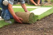 Talavera Landscaping thumbnail 3