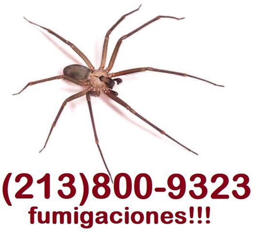 FUMIGACIÓN DE CUCARACHAS. image 3
