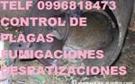 DESRATIZACIONES Telf 2428098 en Quito