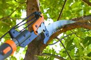 J Perez Tree Service thumbnail 2
