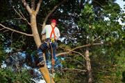 Armando's Tree Service