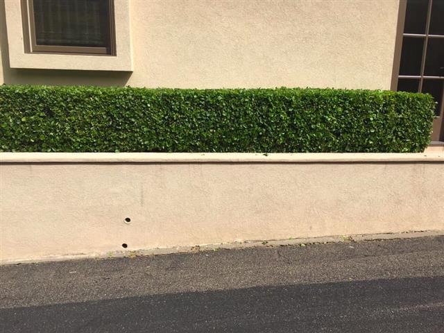 Green Grass image 3